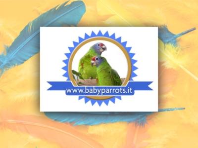 Babyparrots sito web